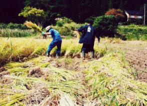 【酒米づくり体験プログラム2019】稲刈り体験参加者募集中!!